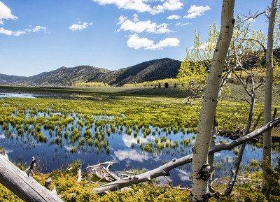 Fishlake from the Pando Forest | Fishlake National Forest