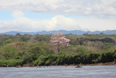 View from Tarcoles River