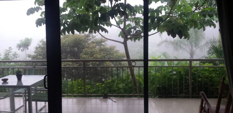Close Up Vistas in Rain & Fog