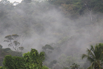 Morning in the Rainforest