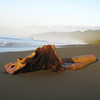 Driftwood on Corcovado Beach