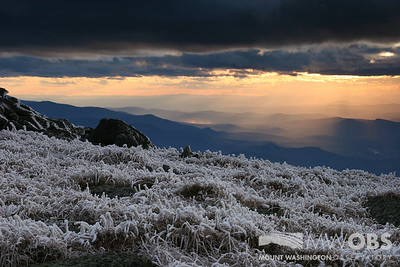 Late summer rime on alpine vegetation as the sun starts to set.