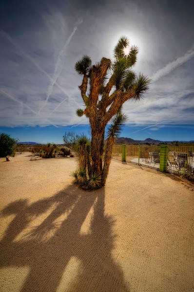 Joshua Tree Inn