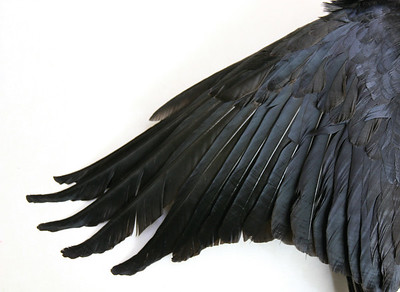 Judy Tuwaletstiwa, from The Crow, 2006