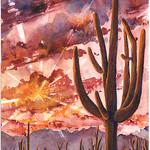 Saguaro Radiance