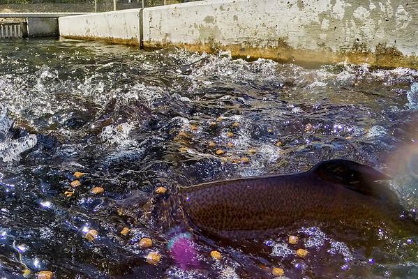 Hagerman Fish Culture Experiment Station