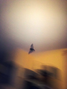 Was able to capture the intruder with my iPhone...