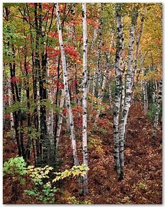 Deep Forest