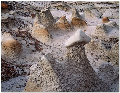 Bisti Mushrooms