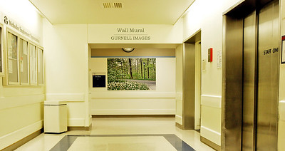 Wall Murals can be made to fit any size wall.