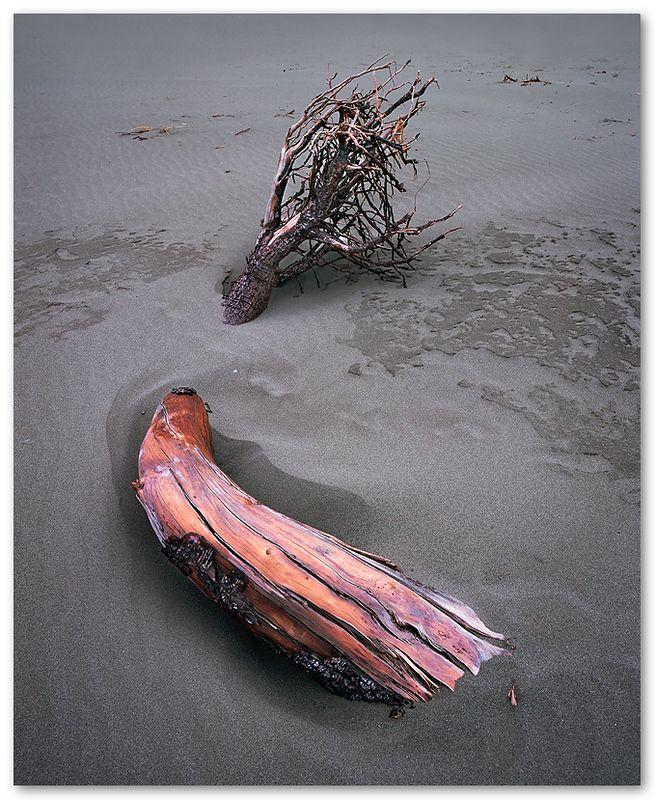 Half Burried Driftwood