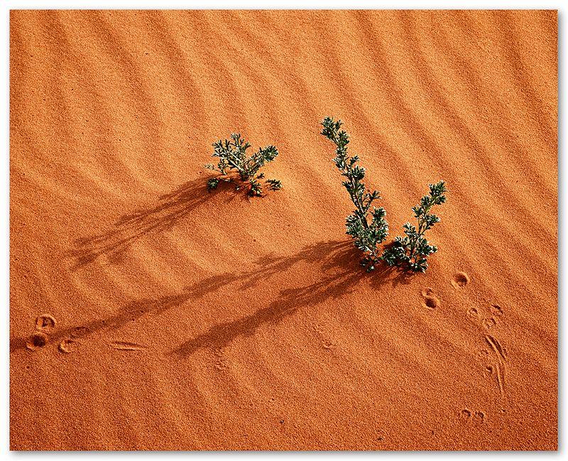 Pink Sand Dune
