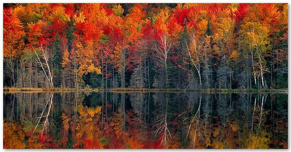 Autumn Symmetry