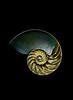 Nautilus Part Deux