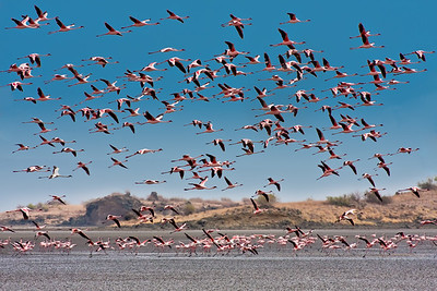 Paysage de flamants roses.