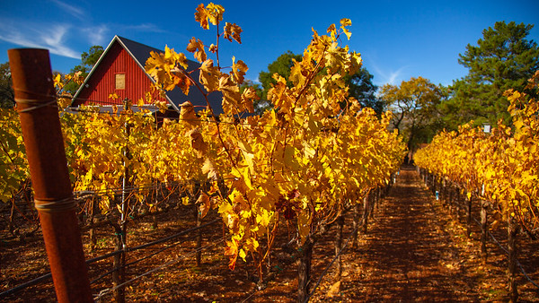 Colors of Napa Valley Fall