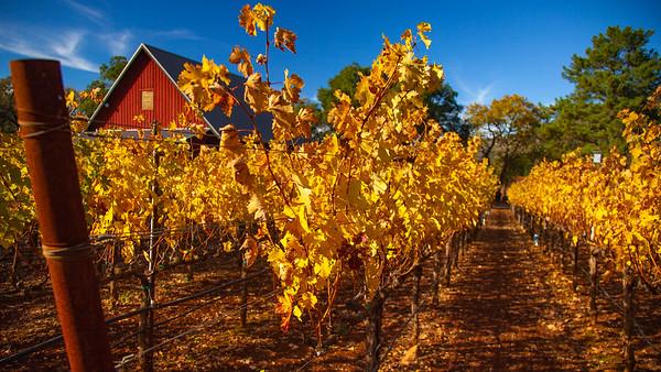 Colors of Napa Valley Fall