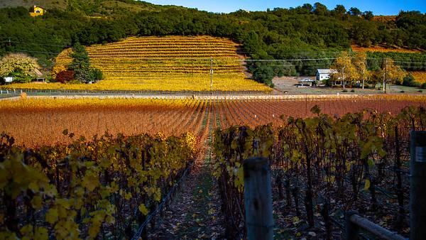 Napa Valley Fall Vines