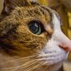 Cannot fully evaluate a lens without a cat picture.