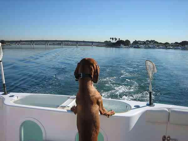 Maverick's Gone Fishing (Noel & Copper)