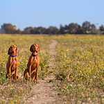 Track (Juno & Toby) and Prim (Summer & Ruger) in a field of flowers