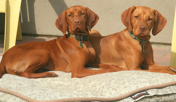 Gypsy & Polly (sisters from Bingo & Ruger)