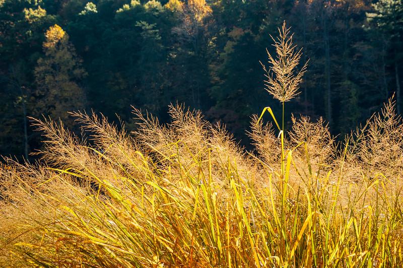 Grass Aglow.