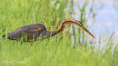 MB_200722_purperreiger0162-109-PS