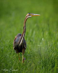 MB_200722_purperreiger0162-80-PS