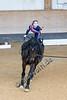 Pferd_Inter_2019_0201_klickvolti