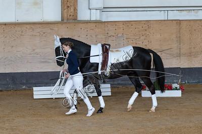 Pferd_Inter_2019_0108_klickvolti