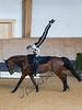Pferd_Inter_2019_0188_klickvolti
