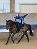 Pferd_Inter_2019_0223_klickvolti