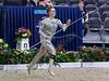 World Championships Vaulting 2019 Ermelo, Annemie Szemes (GER), Horse: Fernando, Lunger:  Dagmar Szemes