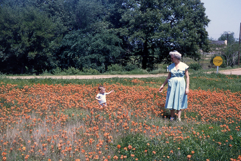 [BP] April '54, on the road from S'port to Hondo. Near Hearne, I think, in a patch of Indian Paintbruch flowers.