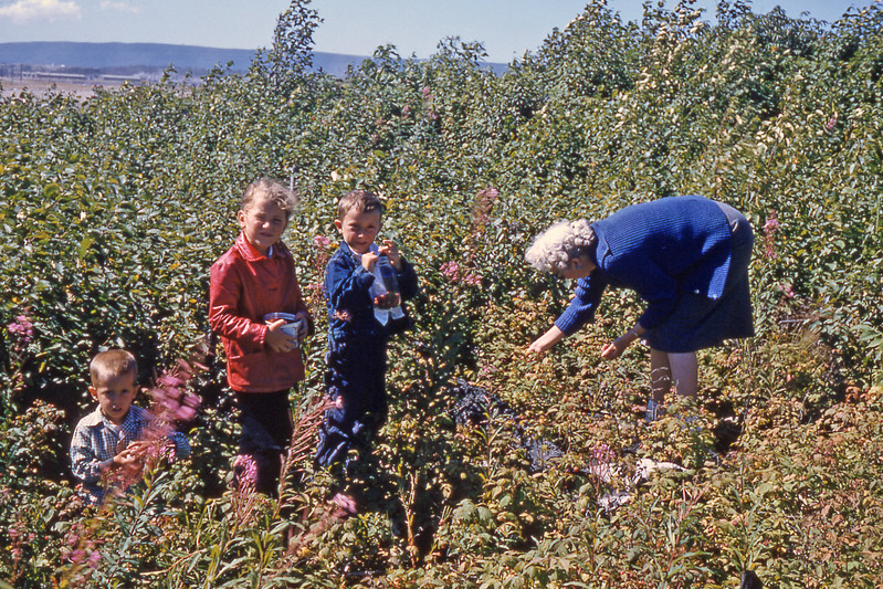 [BP] July '57. Another Sunday drive, but the roads were terrible. Grace, Randy, Anne Steubinger and friend picking berries - blue berries I think.
