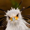 Birds-JWright