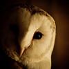 Birds-Pete
