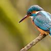 Birds-aligater