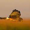 Birds-dangles