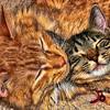 Pets<br /> Woolburr