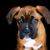 Pets - ErikM<br /> Max Shot