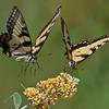 Wildlife - rrdjserve@earthlink.net