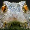Wildlife - Beau Hudspeth