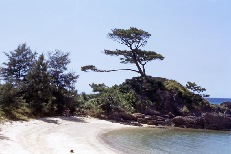 [BP] August '48. Trees on the beach.