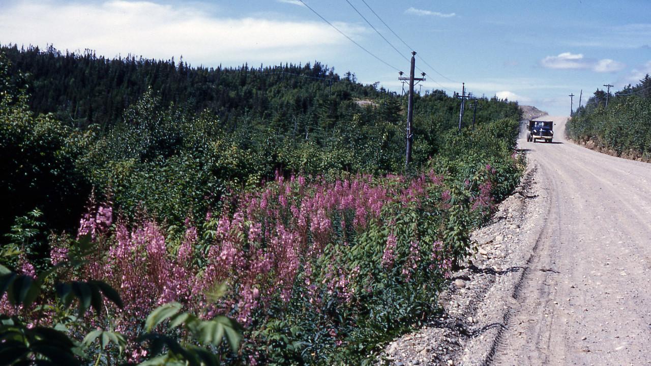 [BP] Native wild flowers.