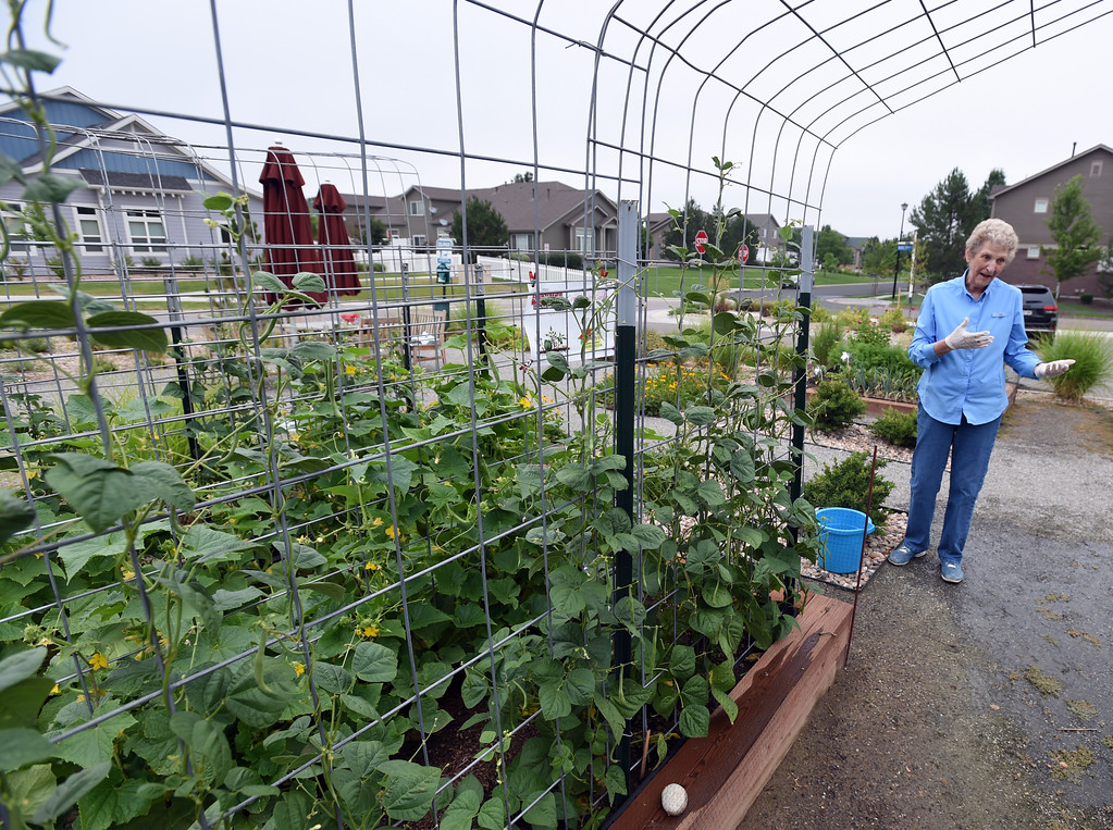 . Ann Karlen, standing next to cucumber plants,  was among the volunteers that created and care for the garden at The Avenues at Crofton Park in Broomfield. For more photos, go to broomfieldenterprise,com.  Cliff Grassmick  Staff Photographer July 28, 2017