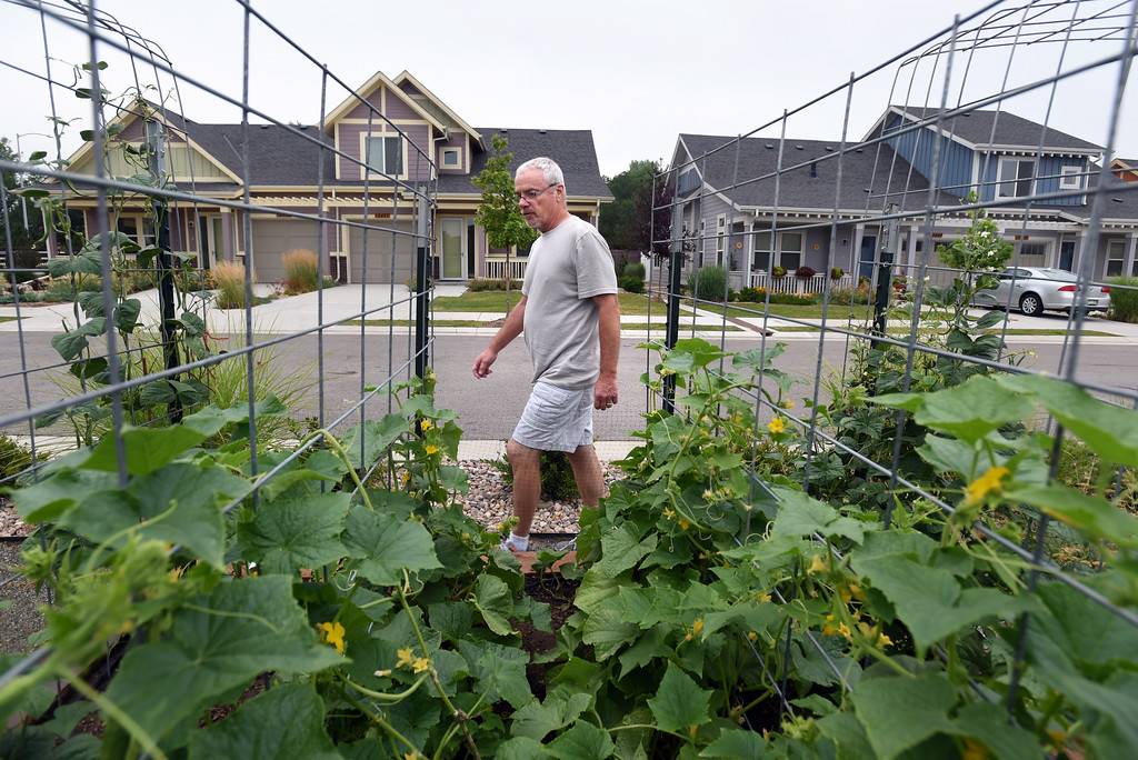. Ken Kirk, walking by the cucumbers, was among the volunteers that created and care for the garden at The Avenues at Crofton Park in Broomfield. For more photos, go to broomfieldenterprise,com.  Cliff Grassmick  Staff Photographer July 28, 2017