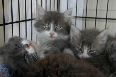 Foster Kittens - Jul 2011 pt trois