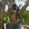 Dancer & Sansei sittin' in a tree...